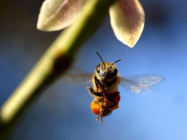 ミツバチは、天体観測をしている?
