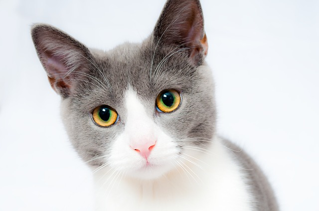 ネコの年齢の数え方は?