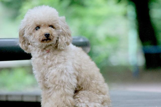「ペットとして飼ってみたい動物ランキング」ベスト10