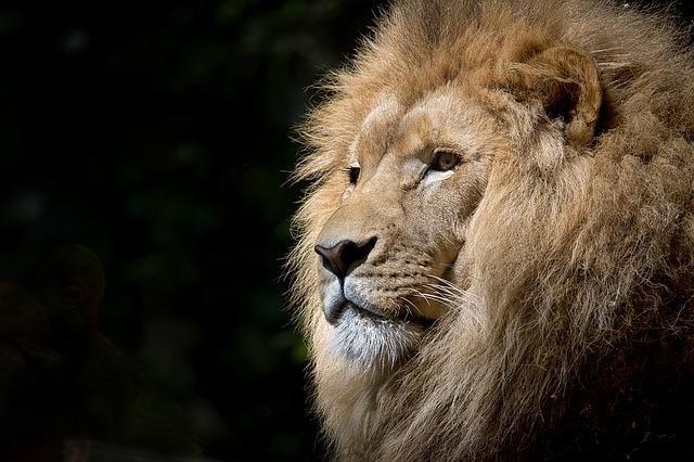英語では、「いいとこ取り」を「ライオンの分け前」という?
