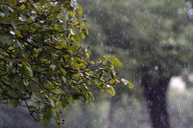 平安時代の女流作家を生んだのは、秋の長雨?