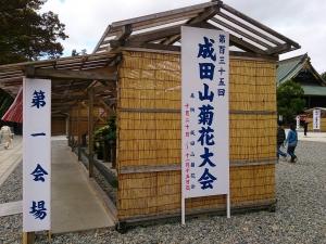 1810成田菊花1