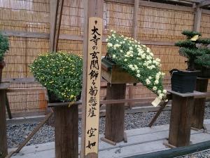 1810成田菊花2