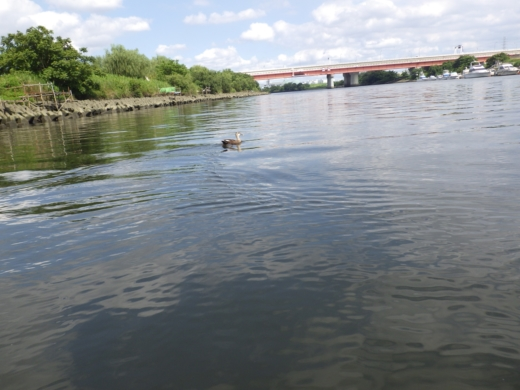 荒川でボート (54)