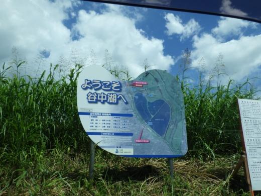 渡良瀬遊水地 (5)