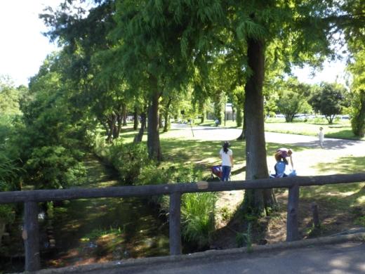 水元公園 (5)