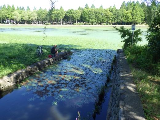 水元公園 (11)