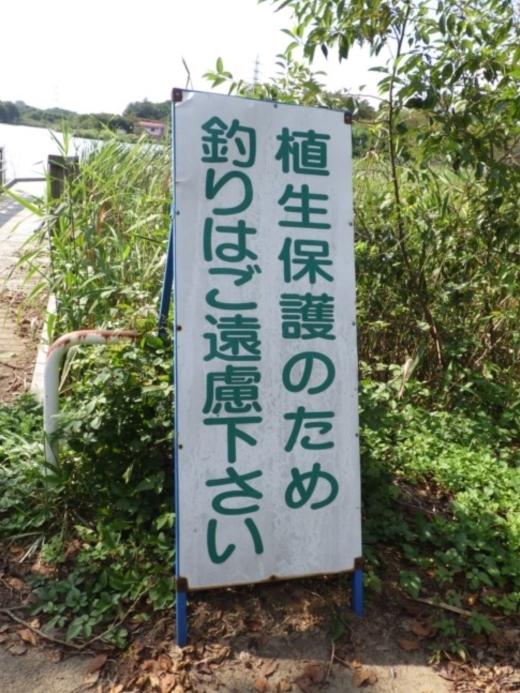 上野沼キャンプ場 (22)