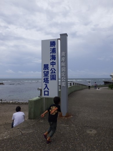 勝浦で磯遊び (1)