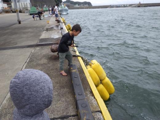 勝浦漁港 (16)