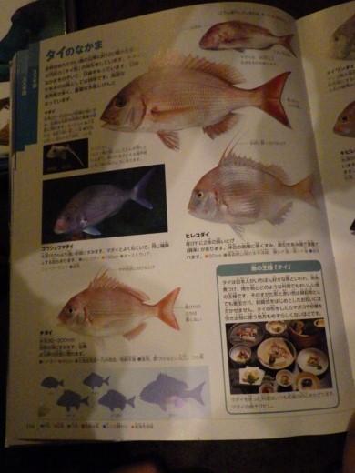 勝浦漁港 (39)
