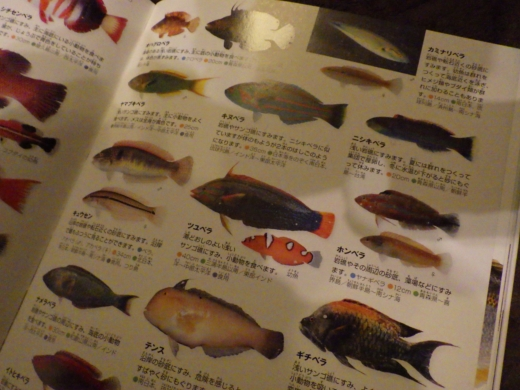 勝浦漁港 (40)