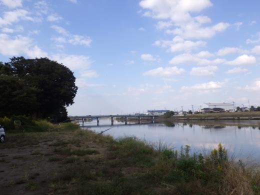 中川の釣り (5)