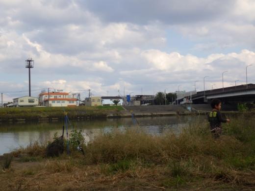 中川の釣り (8)