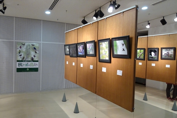 秋ヶ瀬野鳥クラブ写真展20181104-1