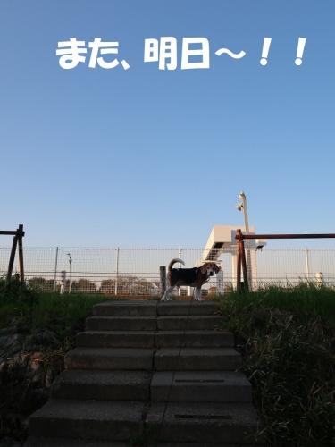 IMG_1439 (2)-2