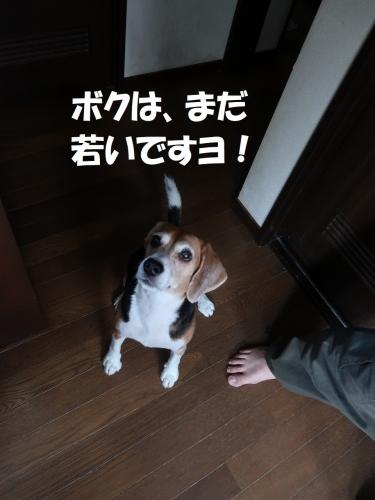 IMG_0966-2.jpg
