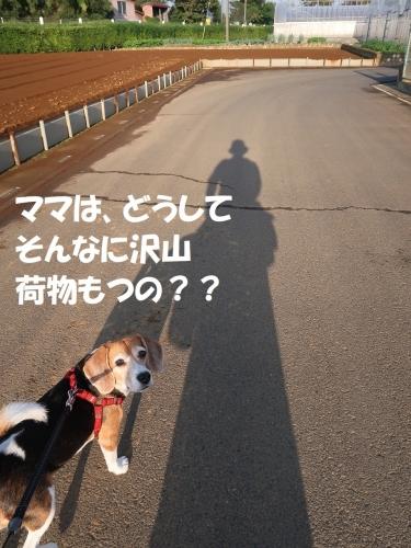 IMG_1079-2.jpg