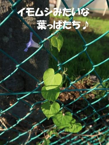 IMG_1250-2.jpg