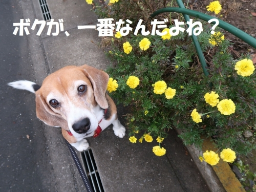 IMG_1519-2.jpg