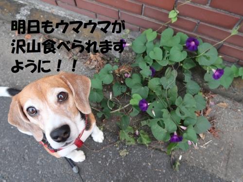 IMG_1587-2.jpg