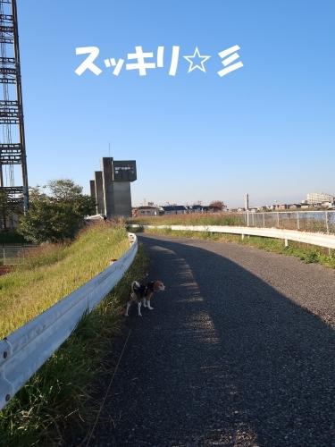 IMG_2377-2.jpg