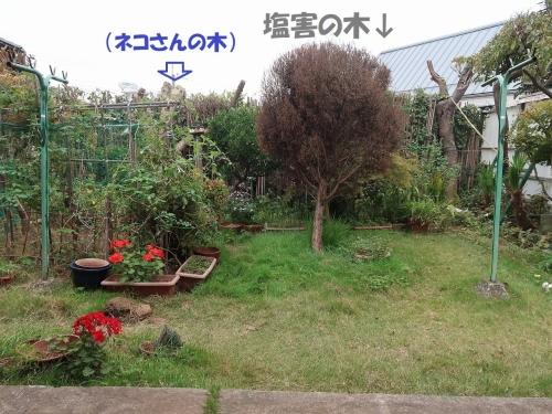 IMG_2394-2.jpg