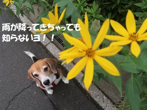 IMG_9736-2.jpg