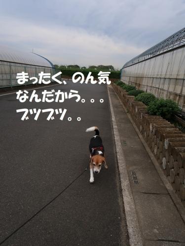 IMG_9743-2.jpg
