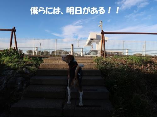 IMG_9945-2.jpg