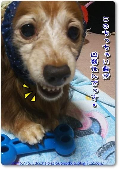 DSC_0064-crop.jpg