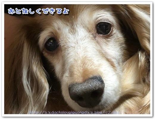 IMG_4262.jpg