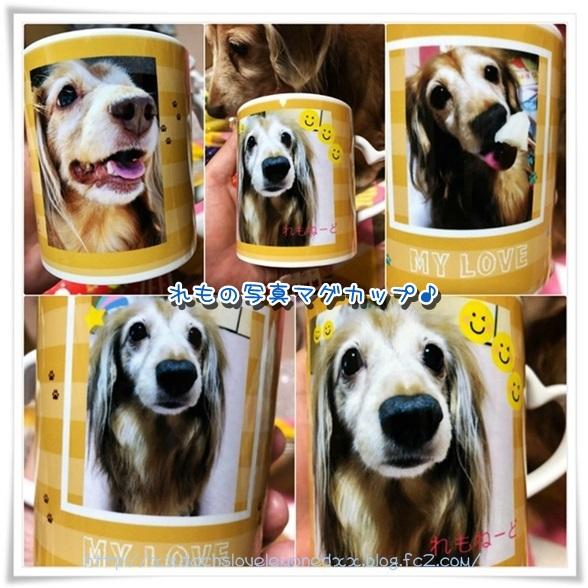 collage_photocat1215.jpg