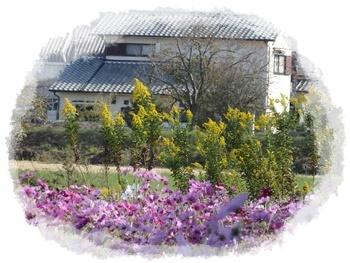 コスモス園