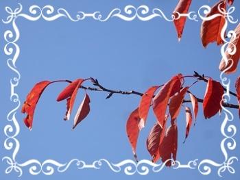 桜の巣立ち