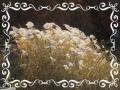 風になびく葦