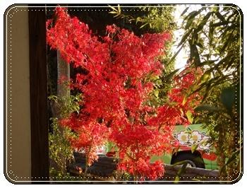 紅葉 真紅