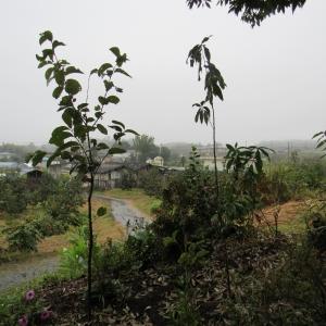 27雨降り (2)