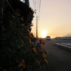 29朝霧陽3