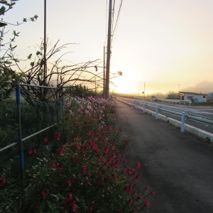 29朝霧陽4