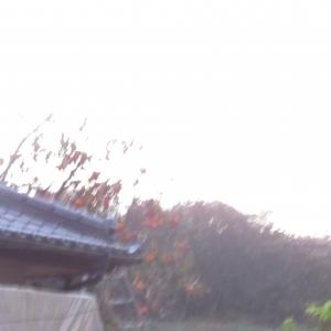 06晩秋 (1)