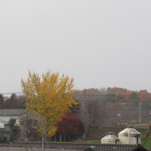 05雨 (2)