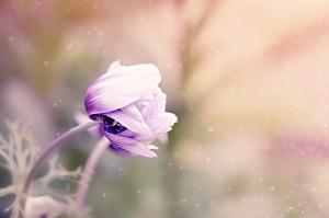 anemone-1533515_960_720_convert_20161005231837.jpg